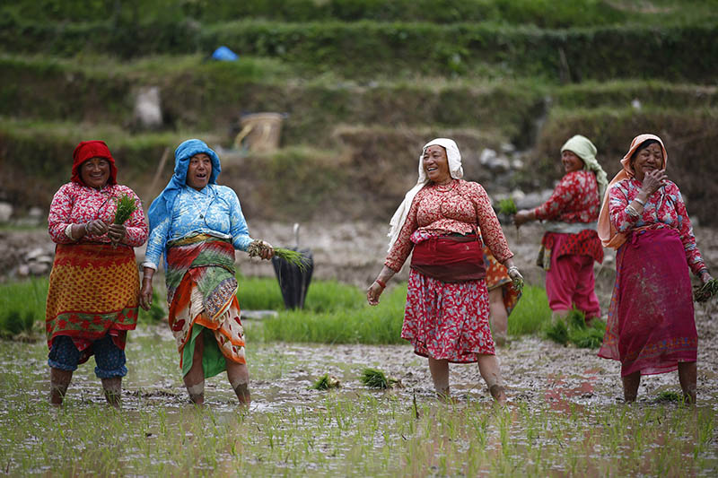 Nepali farmers take a breather as they plant rice saplings in a paddy field ahead of annual celebrations of Ropai Jatra, on the eastern outskirts of Kathmandu, on Thursday, June 8, 2017. Photo: Skanda Gautam