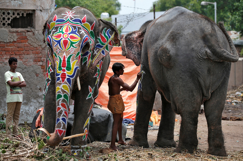 A mahout paints his elephant on the eve of the annual Rath Yatra, or chariot procession, outside the Jagannath temple in Ahmedabad, India, on June 24, 2017. Photo: Reuters