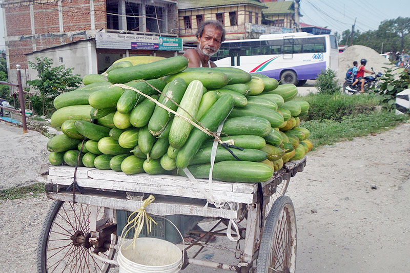 A cucumber vendor waits customer in Illam district, on Thursday, July 13, 2017. Photo: RSS
