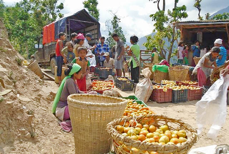 Commercial vegetable farmers await costumers at a roadside in Chure Rural Municipality in Kailali district, on Monday, August 28, 2017. Photo: RSS