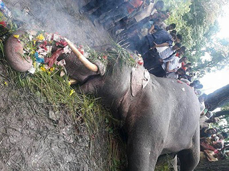 Locals offers their homage to a dead elephant in Kanchanpur district, on Friday, August 25, 2017. Photo: Tekendra Deuba