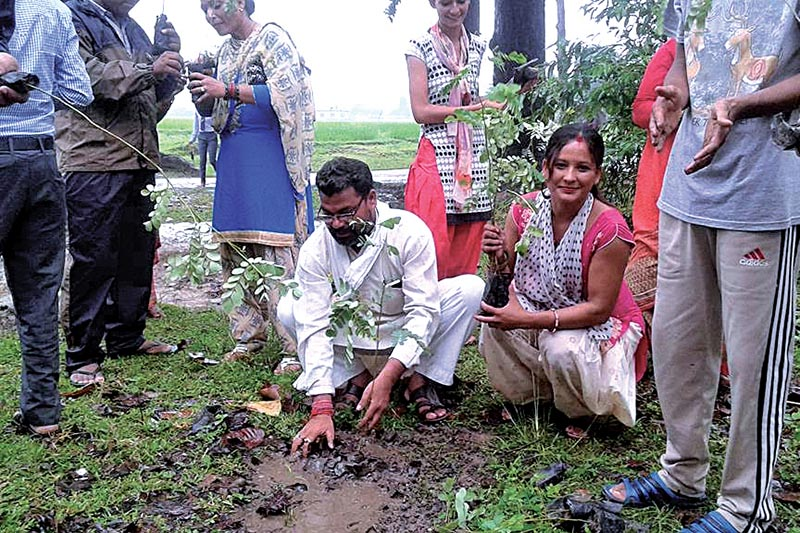 Mayor Nripa Bahadur Odd planting a tree sapling in Dhangadi Sub-metropolitan City, on Saturday. Photo: THT