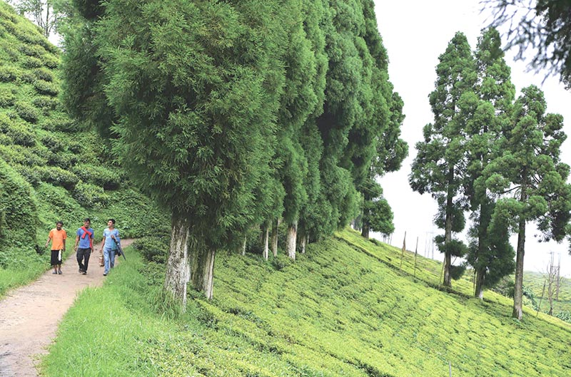 A file photo of people walking along a path at Happy Valley Tea Garden during an indefinite strike in Darjeeling. Photo: AFP