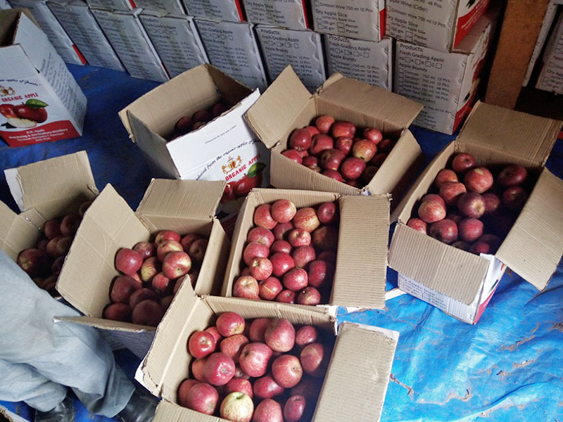Apples being packed in a box for shipment in Jumla district, on Friday, August 25, 2017. Photo: RSS