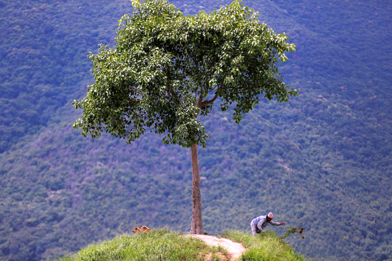 A man works on a hilltop known as one tree hill in Lalitpur, Nepal August 3, 2017. Photo: Reuters