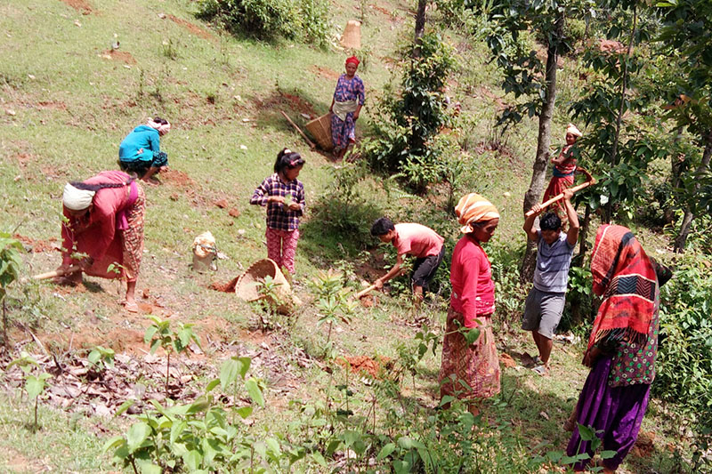Members of local community forest plant tree saplings in Nuwakot district, on Monday, August 28, 2017. Photo: RSS