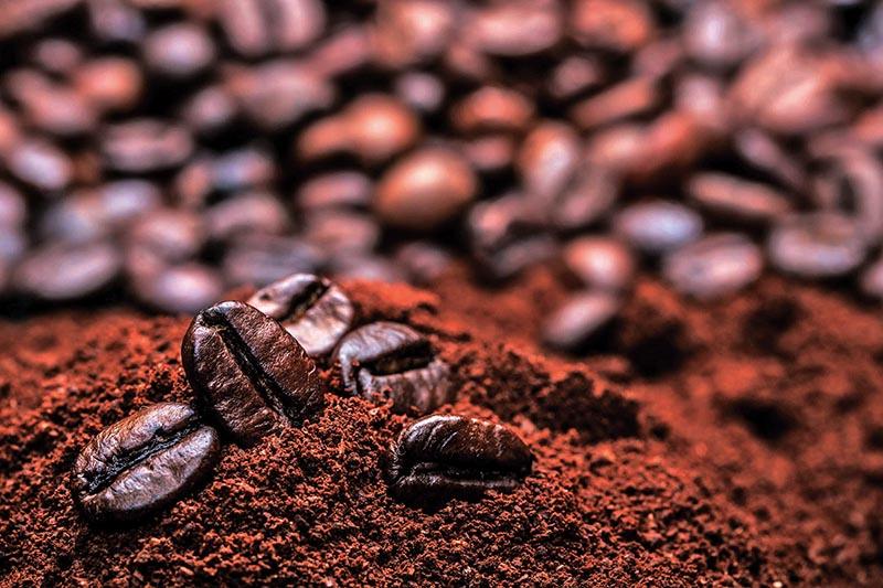 Photo courtesy: Pugshot Coffee; Source: NTCDB