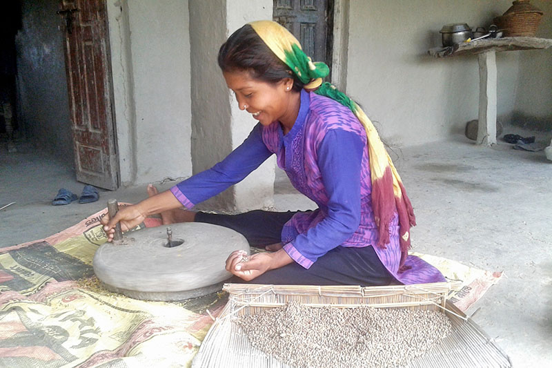 A woman is seen crushing pulse in a traditional stone grinder in Kanchanpur district, on Tuesday, September 19, 2017. Photo: RSS