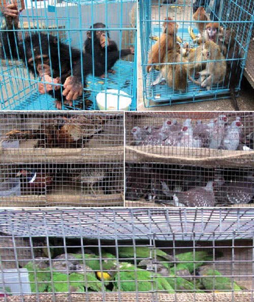 Protected animals and birds kept at District Forest Office, Kathmandu, seized by the police on Wednesday, October 18, 2017. Photo: THT
