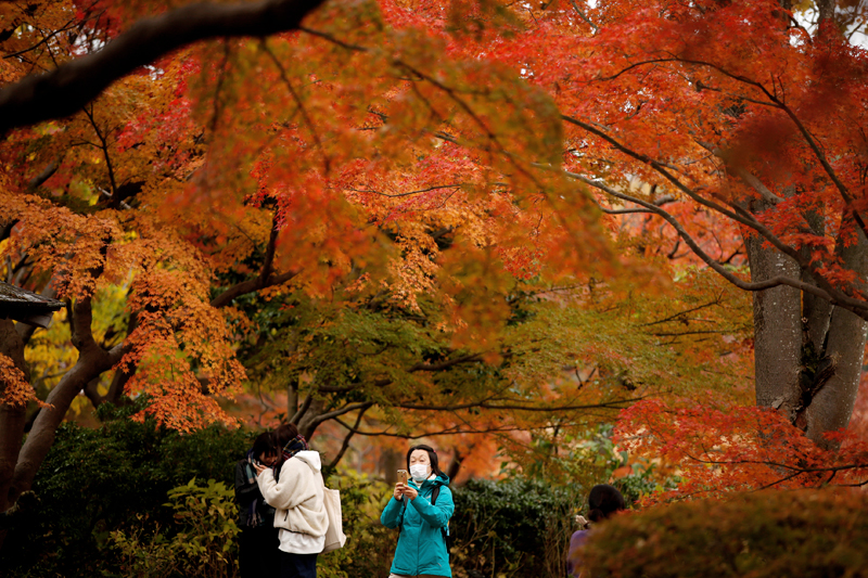 Visitors stroll under autumn colour leaves at a park in Tokyo, Japan November 22, 2017. Photo: Reuters