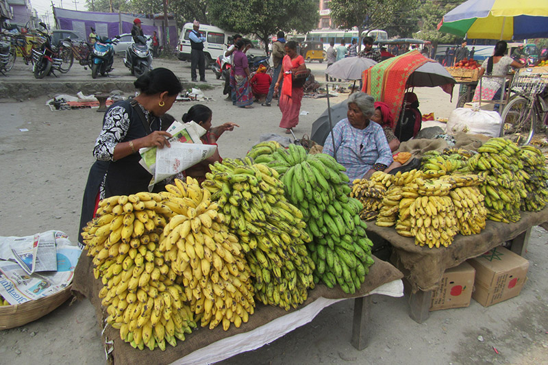 Street vendors awaiting customers to sell their bananas in Itahari, on Wednesday, November 22, 2017. Photo: RSS