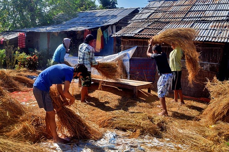 Farmers are seen harvesting rice in Jaruwabasti of Arjundhara Municipality-7 in Jhapa district on Saturday, November 04, 2017. Photo: RSS