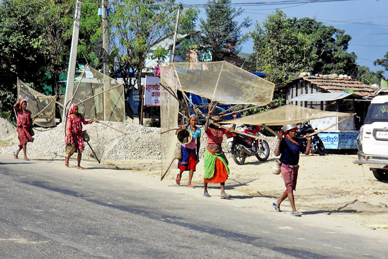 Members of Tharu community carry fishnet as they head to a nearby pond for fishing in Kanchapur district, on Monday, 2017, 2017. Photo: RSS