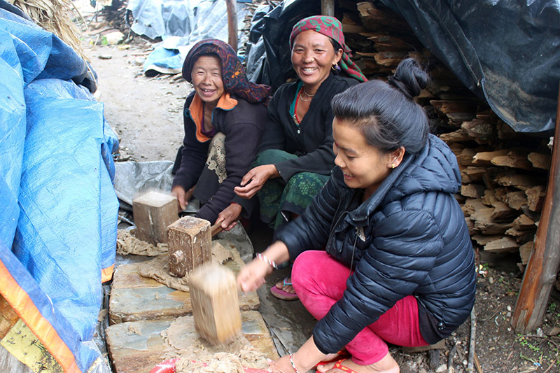 Locals in all smiles as they crush Lokta a material used for the preparation of Nepali papers in Gorkha district, on Thursday, December 21, 2017. Photo: RSS