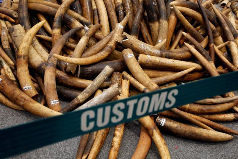 Ivory tusks seized by Hong Kong Customs are displayed at a news conference in Hong Kong, China on July 6, 2017. Photo: Reuters