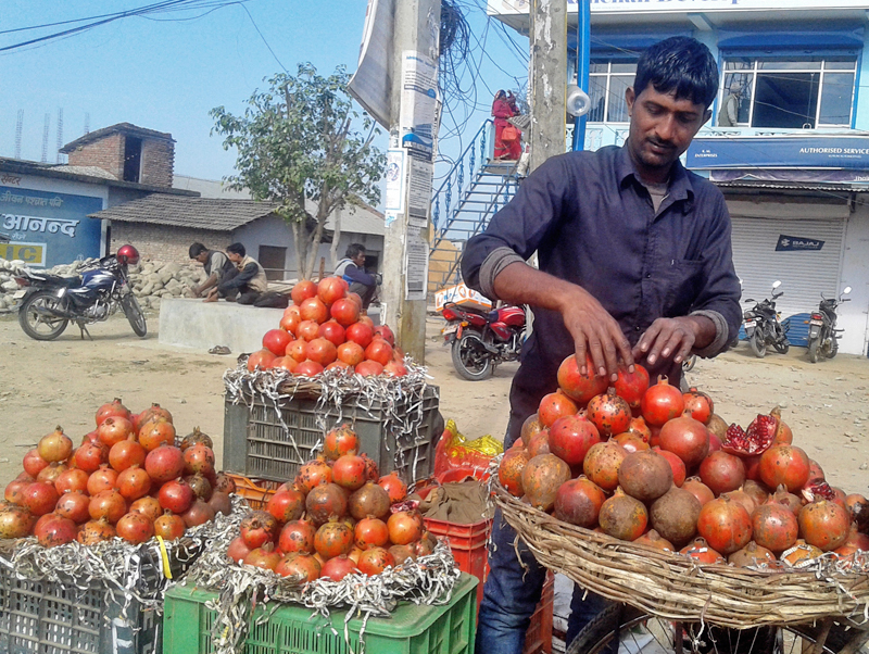 Vendors wait for customer to sell the fresh pomegranates in Kanchanpur, on Saturday, December 23, 2017. Photo: RSS