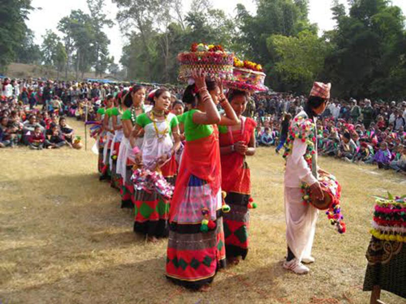 People from Tharu community dancing in their traditional attire as part of their preparation for Maghi festival, on Tuesday, January 9, 2017. Photo: THT.