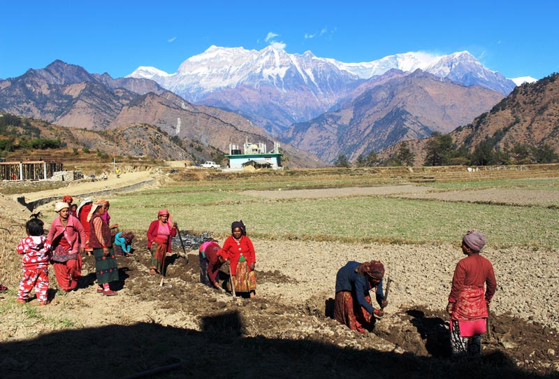 Local women dig in a field to construct water-pipeline in Takam area of Dhaulagiri VDC-7 in  Myagdi district on Monday, January 1, 2017. Photo: RSS