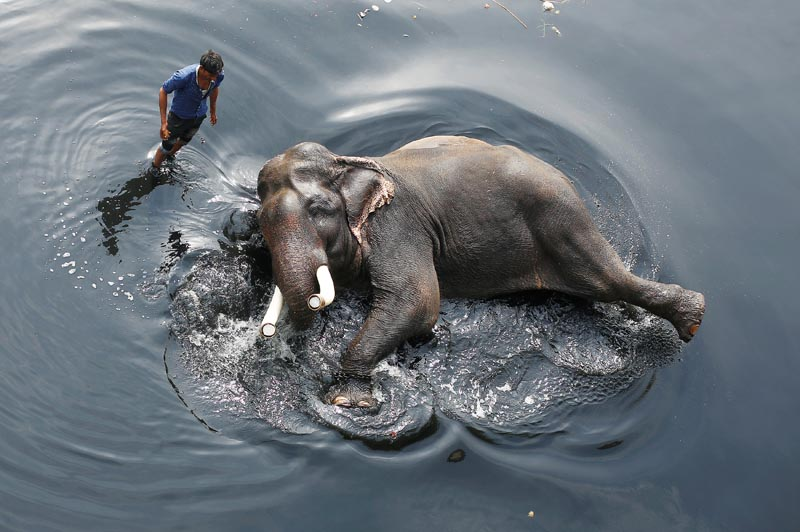 A mahout bathes his elephant in the polluted water of river Yamuna in New Delhi, India February 6, 2018. Photo: Reuters