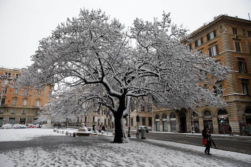 A tree covered in snow is seen during a heavy snowfall in Rome, Italy February 26, 2018. Photo: Reuters