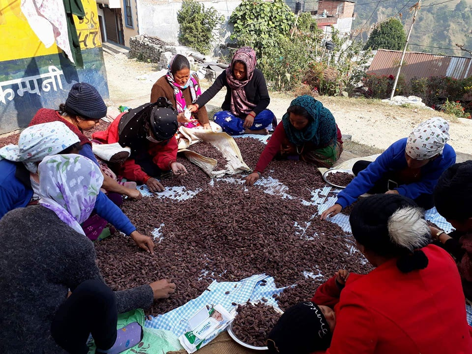 Large Cardamom farmers of Lamjung ready to package the produce for export. Photo: Ramji Rana