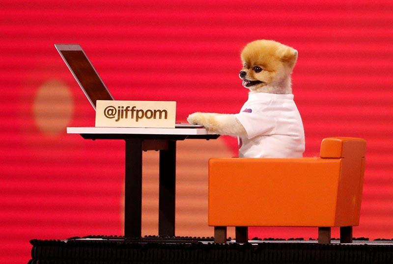A dog with a laptop computer is wheeled on stage during a presentation at Facebook Inc's annual F8 developers conference in San Jose, California, US, on May 1, 2018. Photo: Reuters
