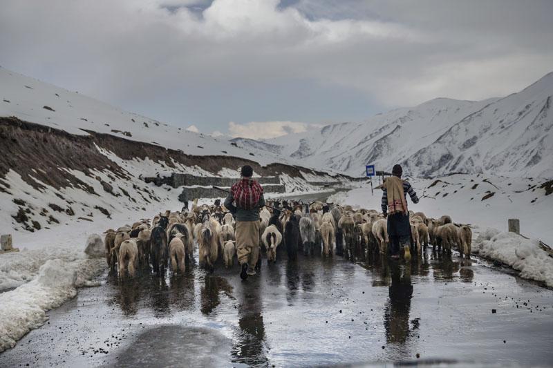 File Photo: Kashmiri nomadic Bakarwals walk with heard of sheep and goats near Peer Ki Gali, India, 80 kilometres south of Srinagar, Indian controlled Kashmir, on May 9, 2018. Photo: Associated Press