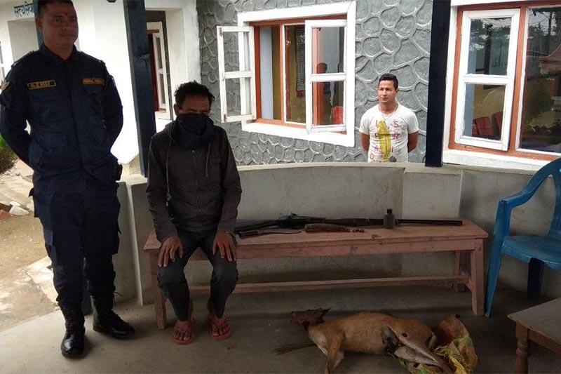 Raj Bahadur Chand, arrested on the charge of illegal hunting and weapon possesion, being made public along with a muzzleloader gun, Khukuri, and dead dear in District Police Office, Dadeldhura, on Thursday, June 14, 2018. Photo: Baburam Shrestha/ THT