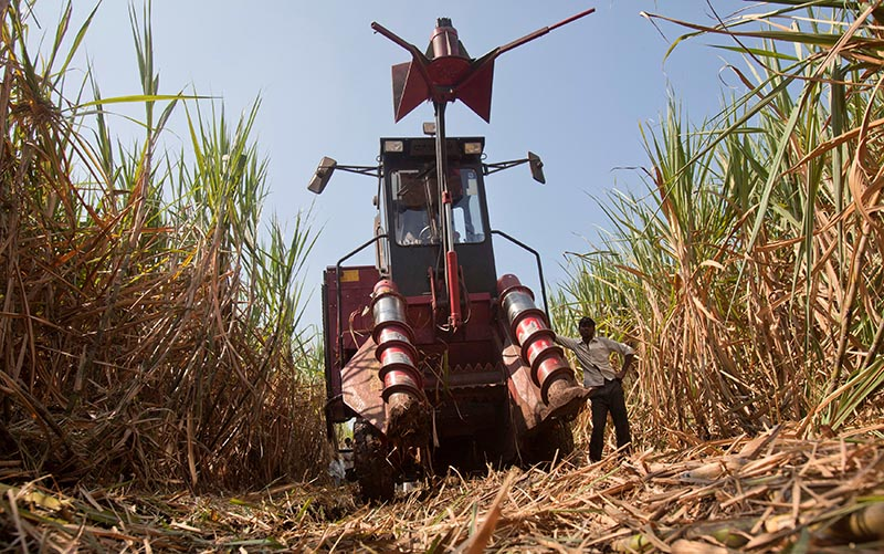 A labourer stands next to a mechanical harvester in a sugarcane field near the village of Umraj, about 285km (177 miles) south of Mumbai, December 5, 2011. Photo: Reuters