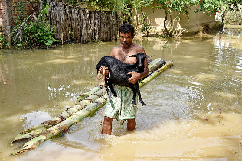 A man carries his goat as he wades through a flooded area at a village in Nagaon district, in the northeastern state of Assam, India, June 19, 2018. Photo: Reuters