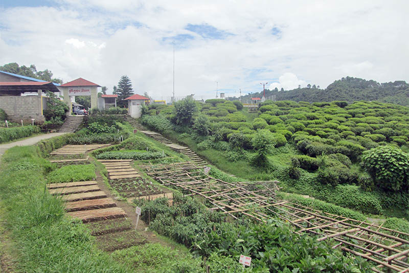 A view of Regional Agricultural Research Station in Lumle of Kaski district, as captured on Sunday, July 15, 2018. Photo: Rishi Ram Baral