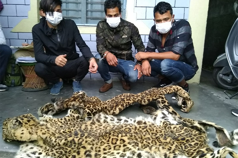 Police make public the arrestees held with two sets of leopard skin from Pokhara on Friday, August 3, 2018.