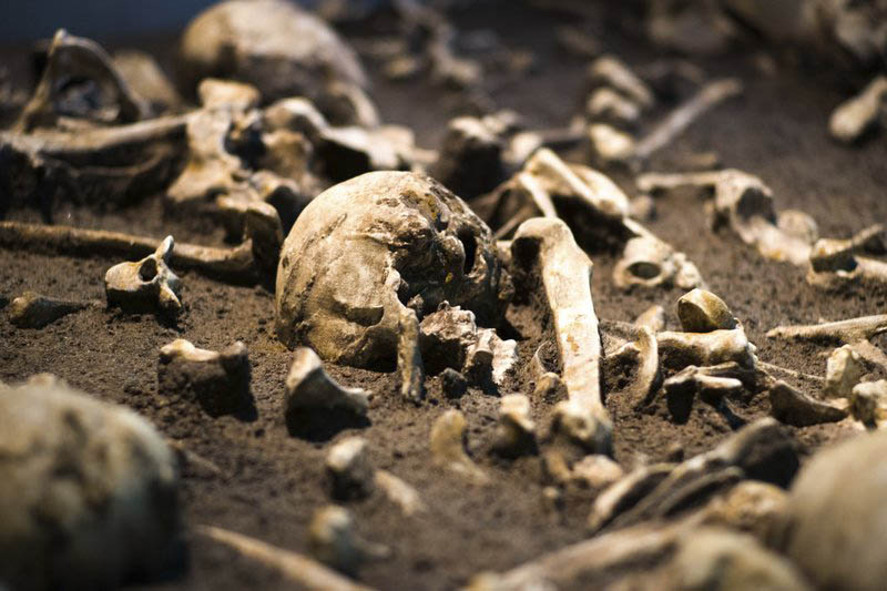 The Sept. 20, 2018 photo shows human skulls and bones of the battle of Tollensetal about 1250 BC. displayed at an archeological exhibition at the Martin-Gropius-Bau museum in Berlin. Photo: AP