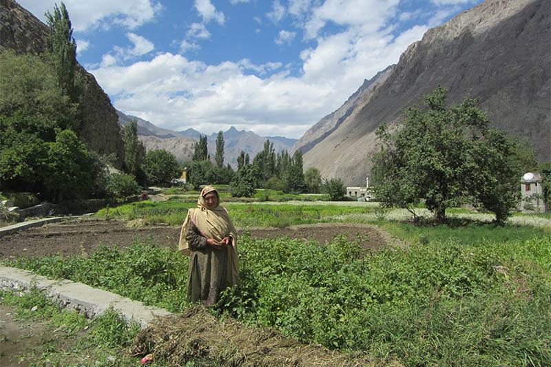 A resident of Siksa, Pakistan, stands near crops irrigated with water from a new pipeline and storage tank system serving the village, September 4, 2018. Photo: Reuters