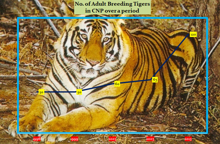 Info-graphic showing tiger population at CNP over 22 years as released by  the national park on Sunday, September 23, 2018. Photo: CNP