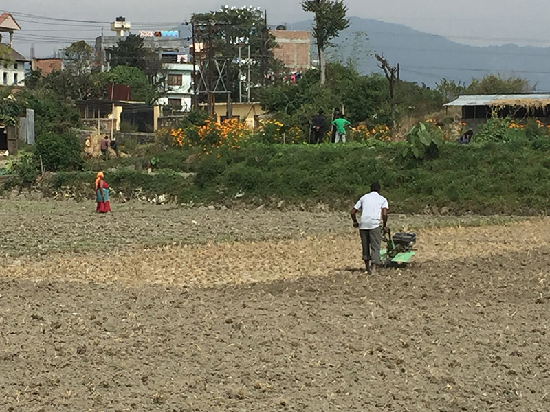 Workers toil to seed new crops and vegetables following the paddy harvest in Kageshwori-Manohara Municipality in Kathmandu, on Tuesday, October 23, 2018. Photo: Prahlad Rijal/THT