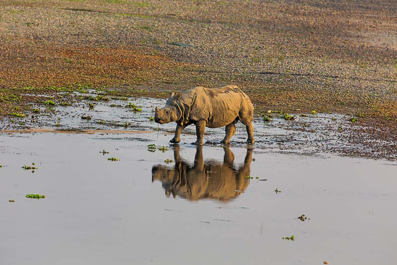 A one horned rhinoceros spotted in Chitwan National park. Photo: mountainkick.com
