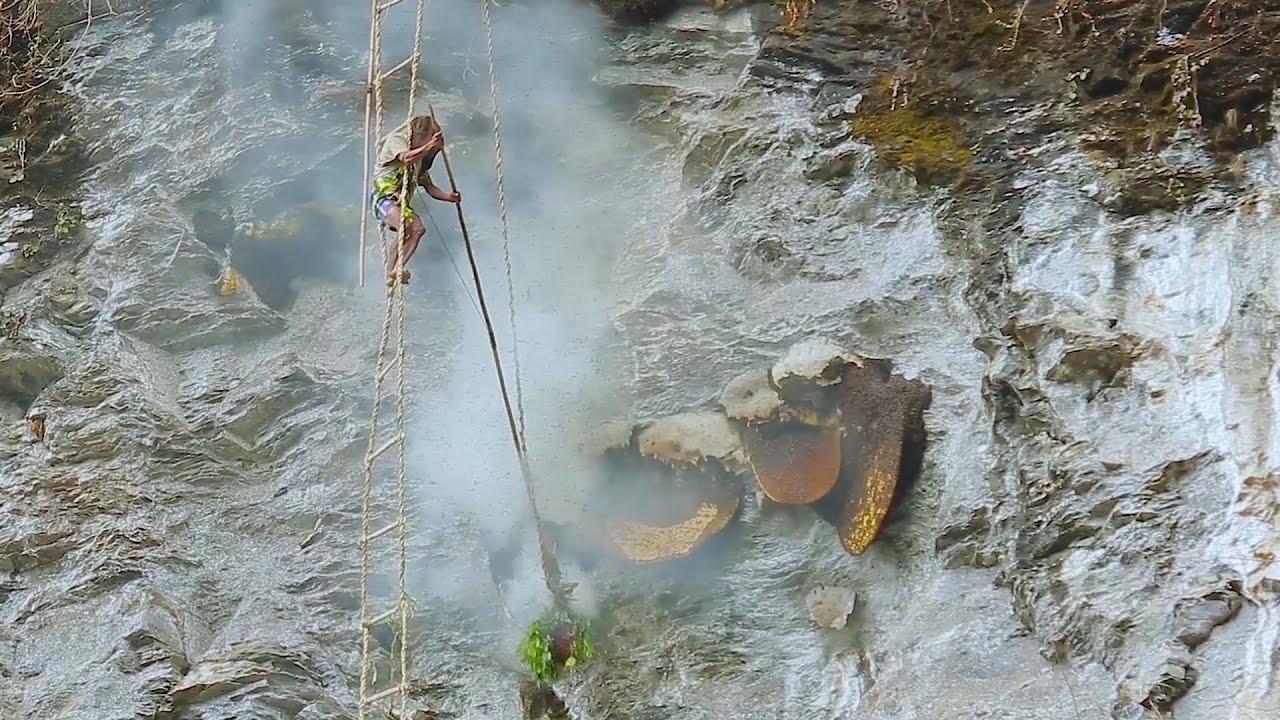 An undated image of a Nepali honey hunter: Photo: Youtube