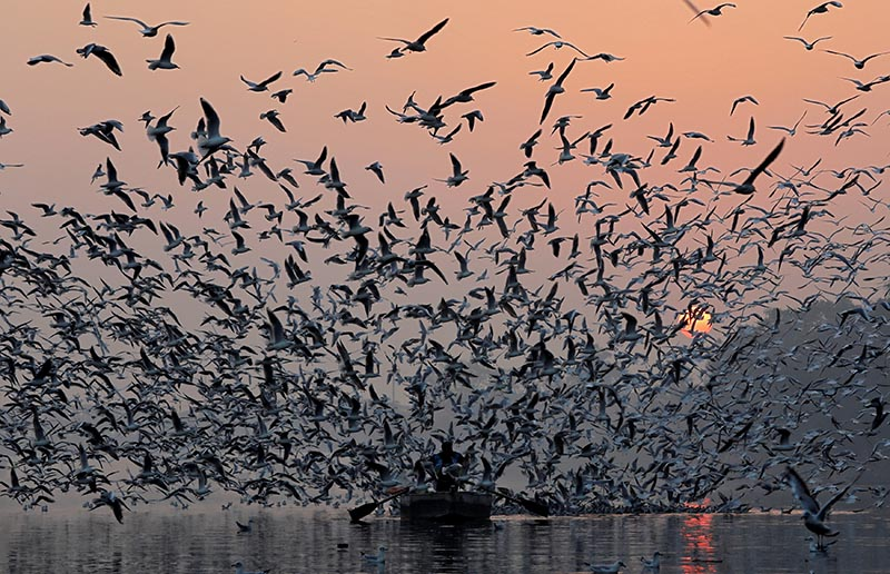 A man rides a boat as seagulls fly over the waters of the river Yamuna early morning in New Delhi, India, November 21, 2018. Photo: Reuters
