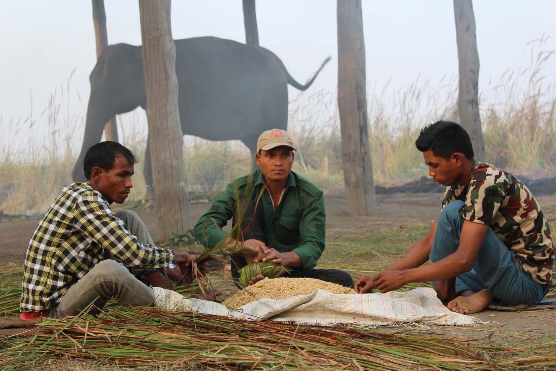 Mahouts at Shuklaphanta National Park in Kanchanpur prepare fodder for a tusker on Saturday, November 10, 2018. Photo: RSS