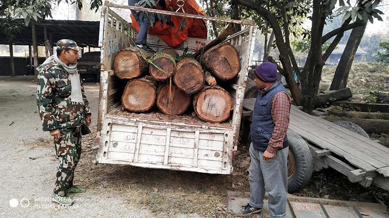 A cache of saal timber seized by a team deployed from Rautahat Division Forest Office in Chandrapur Municipality along the East-West Highway, on Tuesday, January 22, 2019. Photo: THT
