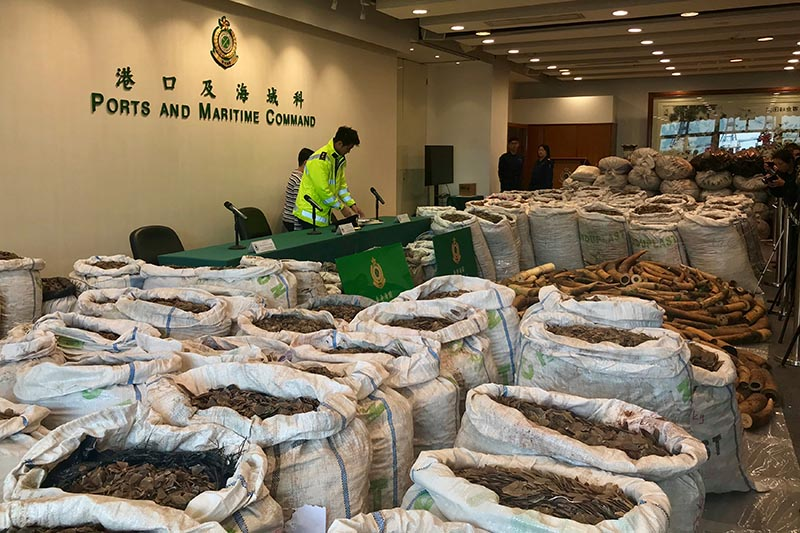 Ivory tusks and pangolin scales seized by Hong Kong Customs are seen at a news conference in Hong Kong, China, February 1, 2019. Photo: Reuters