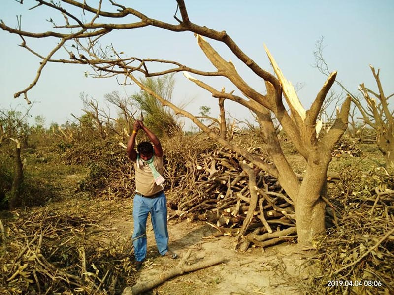 A local chopping trees destroyed by storm to make firewood, in Bara, on Friday, April 5, 2019. Photo: THT