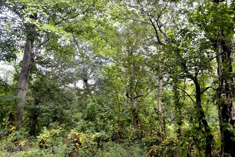 A view of Teghari Community Forest in Godavari Municipality of Kailali district, on Tuesday, April 16, 2019. The area was designated to build the capital of Sudur-Paschim Province. Photo: Tekendra Deuba/THT