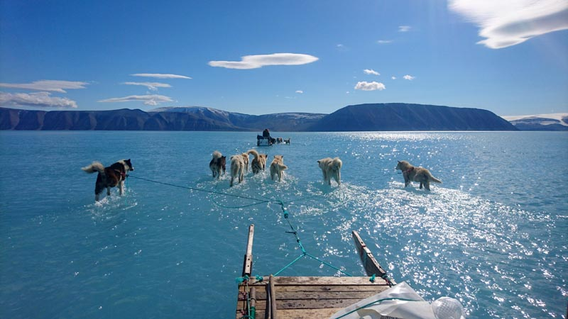 In this photo taken on Thursday, June 13, 2019 sled dogs make their way in northwest Greenland with their paws in melted ice water. Photo: Danmarks Meteorologiske Institut/Steffen M Olsen via AP