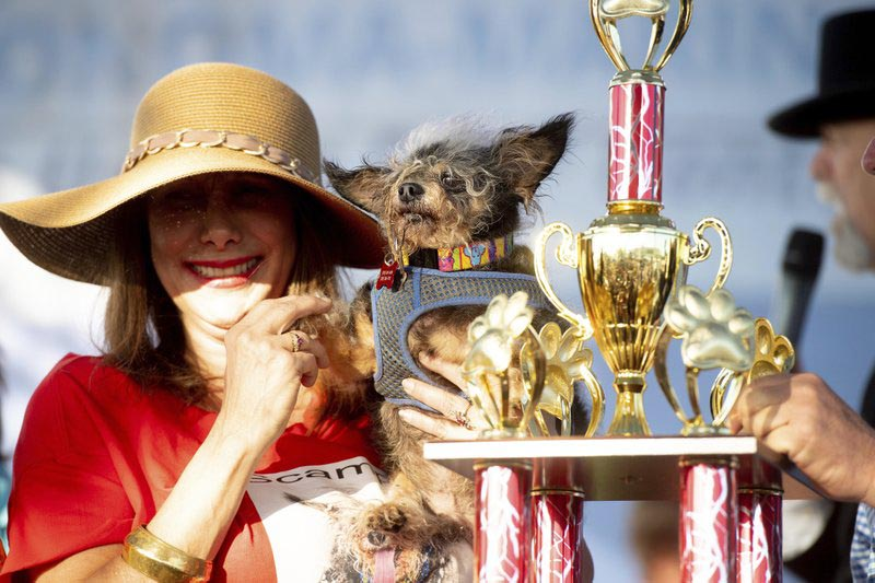 Scamp the Tramp is held by Darlene Wright after winning the World's Ugliest Dog Contest at the Sonoma-Marin Fair in Petaluma, California, on Friday, June 21, 2019. Photo: AP