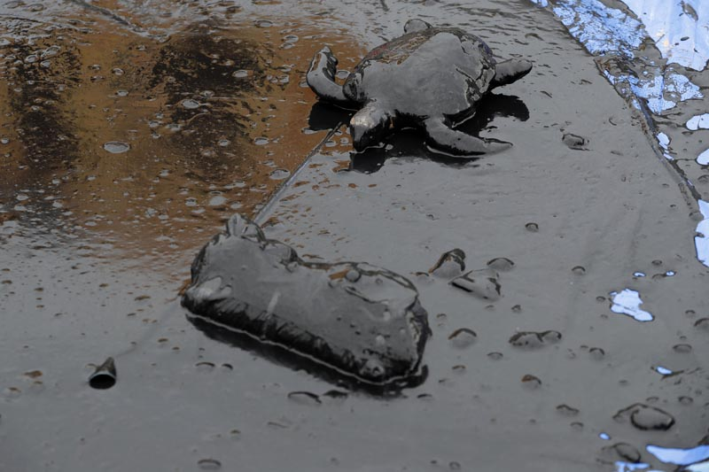 A toy turtle lays covered in oil during a Greenpeace protest against the government's environmental policies, in front of the Planalto Presidential Palace, in Brasilia, Brazil, Wednesday, October 23, 2019. Photo: AP