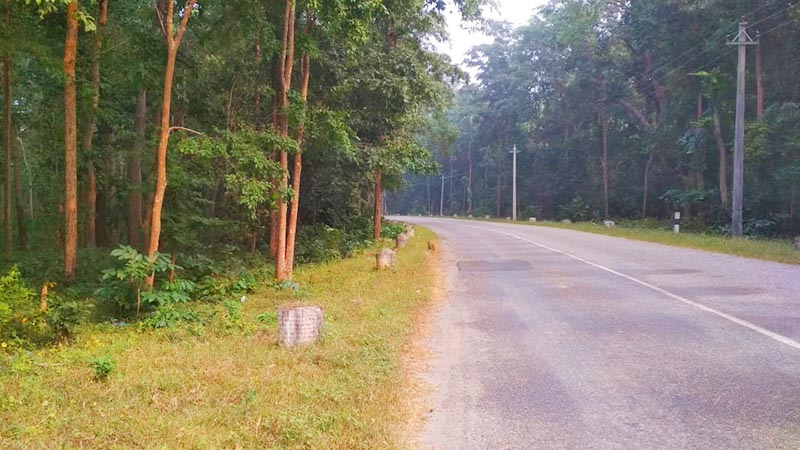 A view of East-West Highway passing through Banke National Park, in Banke district, on Saturday, November 2, 2019. Photo: Suresh Chaudhary/THT