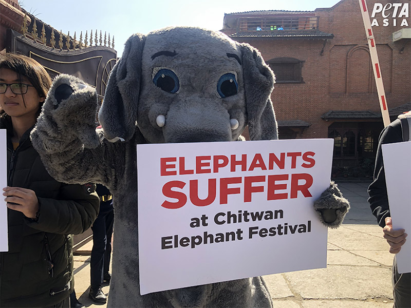 FILE - PETA activists protesting outside the Department of Tourism calling on the government to stop supporting elephant abuse by ending the Chitwan Elephant Festival immediately, in Kathmandu. Photo Courtesy: PETA Asia