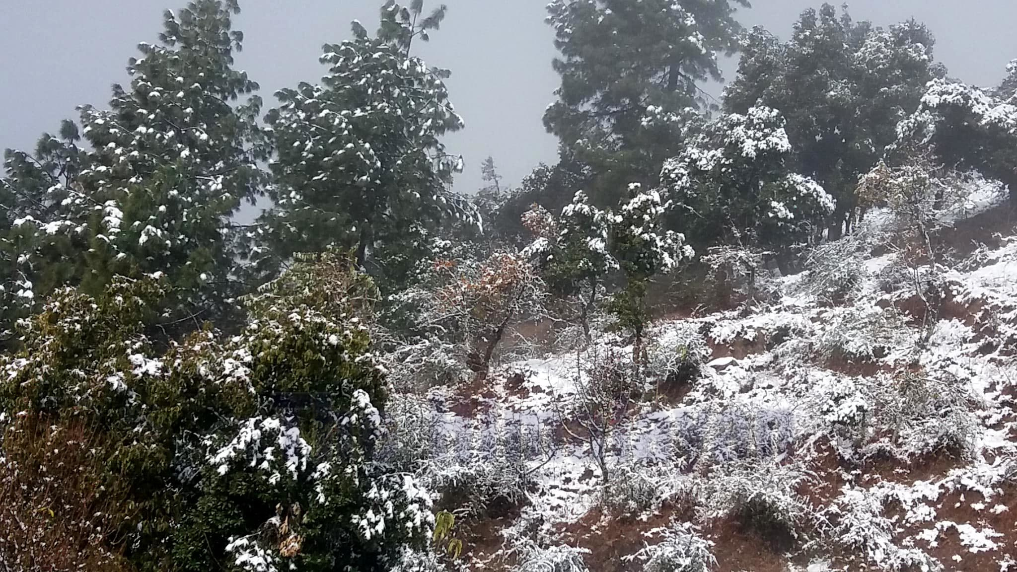A view of vegetation covered in snow in Baghkhor, the district headquarters of Dadeldhura, on Friday, January 3, 2020. Photo: Baburam Sapkota/THT